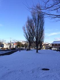 登米市祝祭劇場前の冬樹